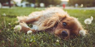 12 Ways Pet Owners Can Be Eco-Friendly