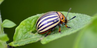Erase Them All: 5 Nontoxic Ways to Fight Pests in Your Garden